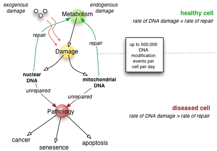 DNA Damage Mechanisms and Repair with regard to Cancer: An Overview