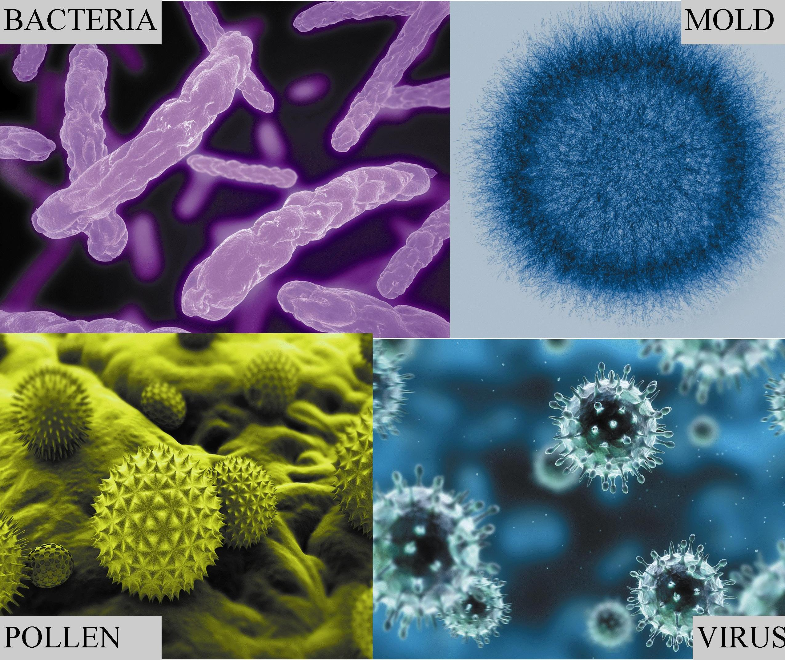 Mold Microbiology Indoor Air Quality Testing